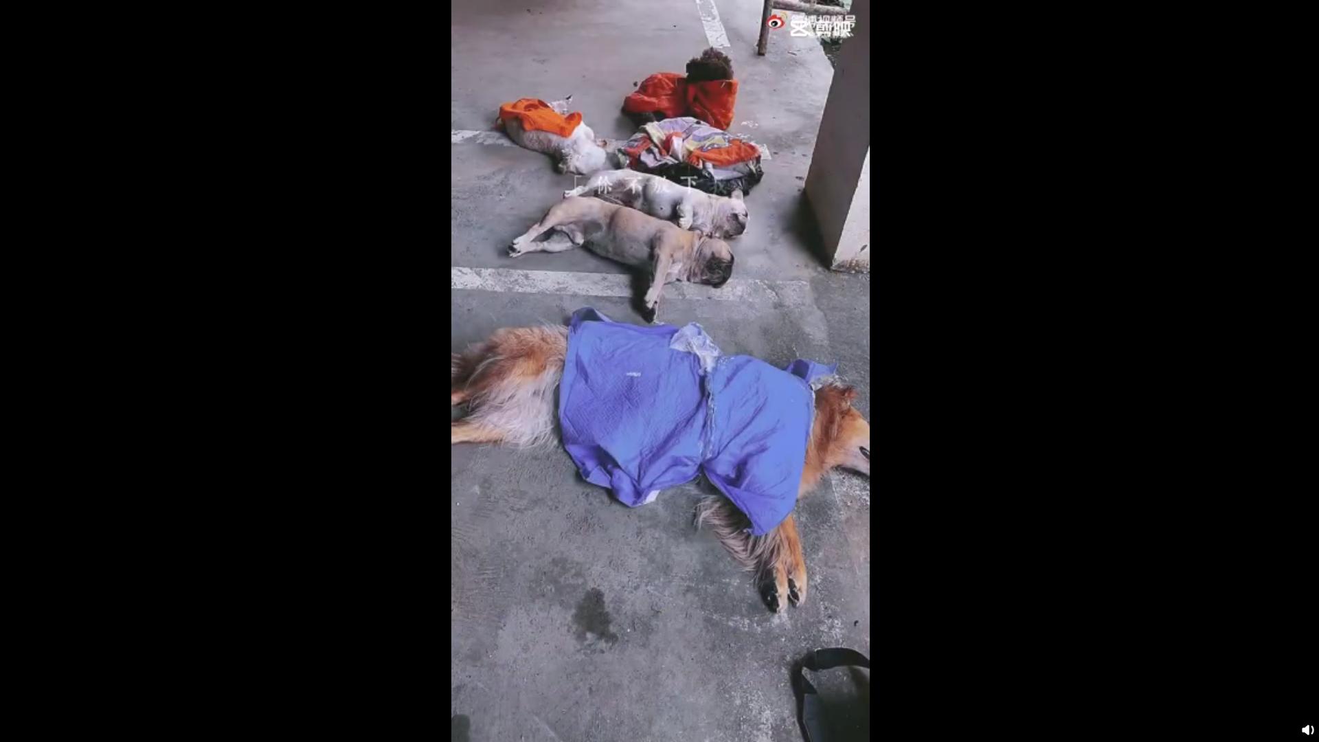 贵州一小区8只狗疑遭投毒死亡,已报警
